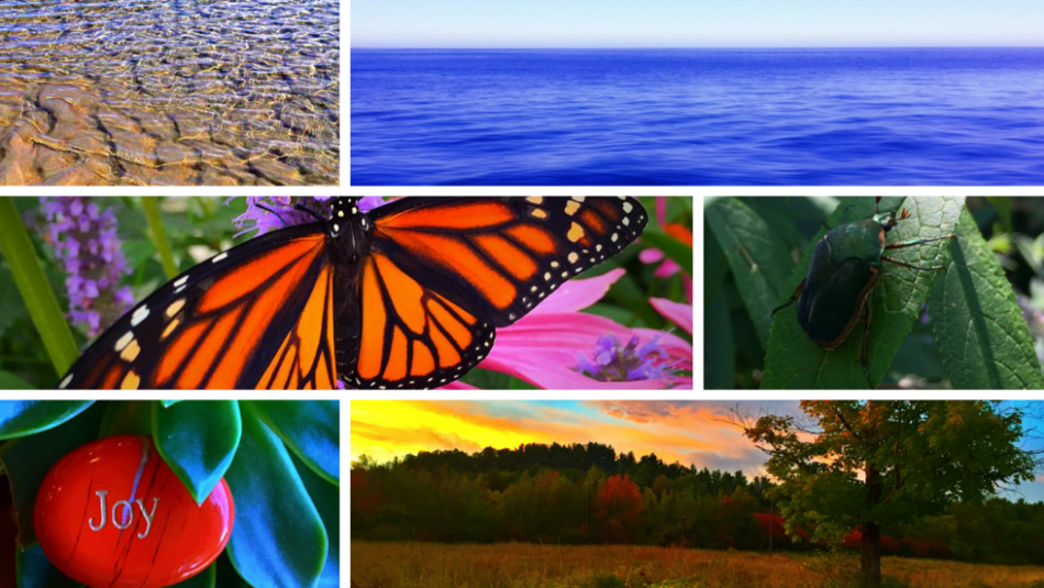 Collage of for Events page. Beach. Water. Butterfly. Bug. Joy. Sunrise over meadow.