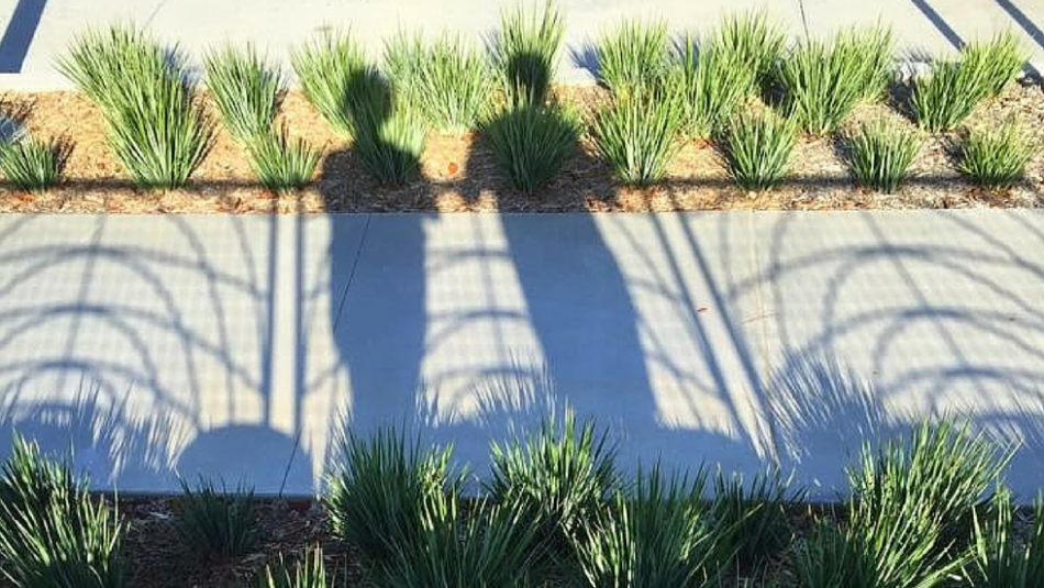 Shadow of couple overlooking community garden