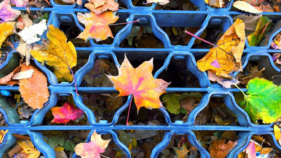 Fall leaves on blue grate